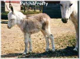 Miniature Donkey My World Frosty & Mom (10,113  bytes)