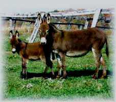 Miniature Donkey My World Tabetha (8524 bytes)
