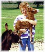 Miniature Donkey My World Red Dream & Me! (6578  bytes)